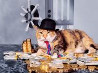 Как выиграть в лотерею? Спроси у кота!