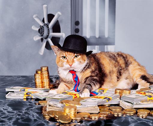 Коты, выигравшие в лотерею